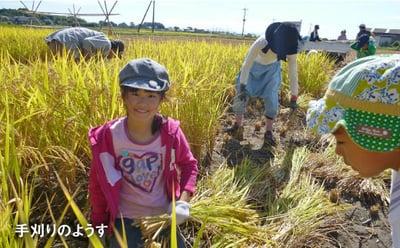 特別栽培米ヒノヒカリ玄米の詳細はコチラ