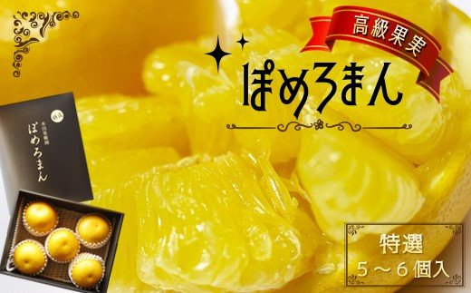 BZ1 高級果実 「特選」ぽめろまん(化粧箱)5~6個入り【数量限定】