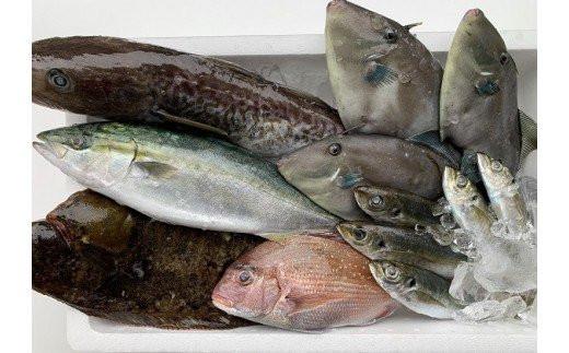 定置網 朝とれ鮮魚 詰め合わせ