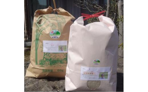 【新型コロナ対策】支援21-1 うまい米食べ比べセット