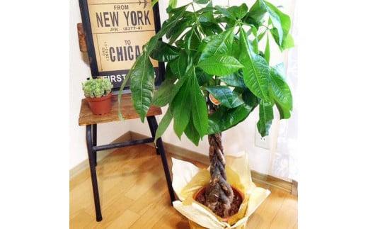 AD-8 グリーンのある生活を観葉・多肉・花鉢植物(12か月)