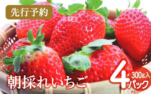 A-370 【先行予約】朝採れ いちご 300g×4パック(2021年4月より発送)