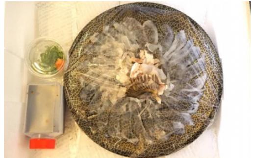 【着日指定可】自家製ポン酢で味わう山口県産ふぐのお刺身(1~2人前)