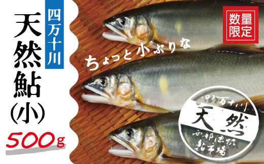 20-775.【数量限定】四万十川の天然鮎(小)500g(約6~9匹)