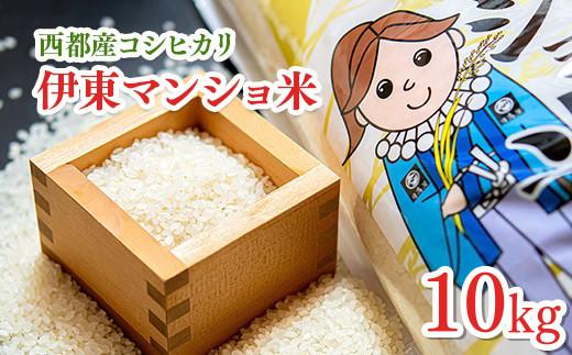 コシヒカリ10kg  令和2年産 伊東マンショ米<1.5-124>