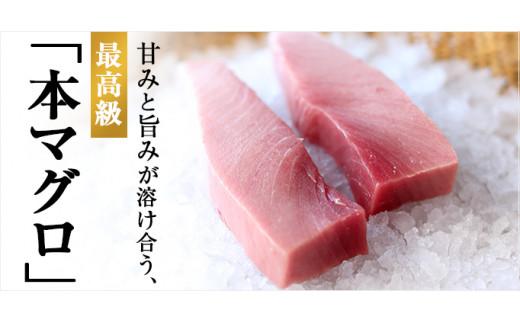 【C0-024】まぐろ丼たれ付き 養殖本まぐろ中トロ500g