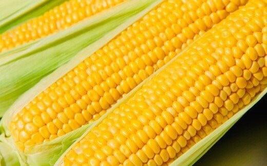 【6・7月出荷】農家直送!朝採りスイートコーン<食べ比べセット>【11218-0227】