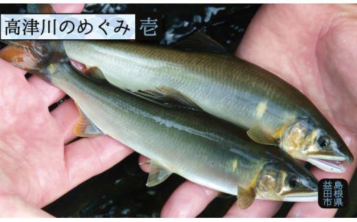 A-258 高津川天然鮎『CAS冷凍』3尾/袋×2(300g)
