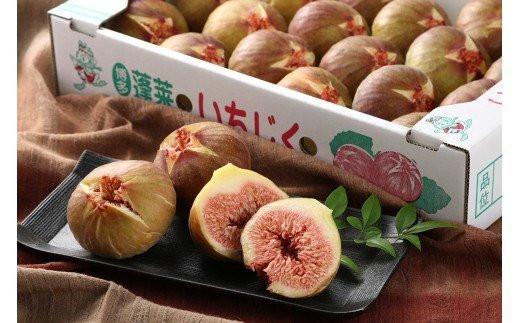 BQ-034 【露地栽培】箱いっぱい!お腹いっぱい!たっぷりいちじく(期間限定)