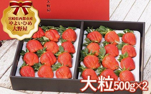【先行予約】苺大野屋 やよいひめ 厳選大粒いちご1kg 宮崎県西都市 <2.5-25>