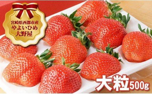 【先行予約】苺大野屋 厳選大粒いちご やよいひめ シングル (1P)<1.3-3>