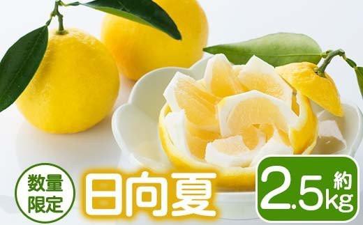 KU252 日向夏2.5kg<L~4L(10~13玉)>