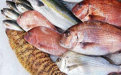 朝獲れ!1000種類の魚種がいる大月の鮮魚便