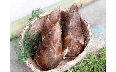 T01537大多喜町産筍 3kg