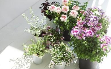 花のある暮らしで心もハッピー。季節の寄せ植え 【11218-0060】