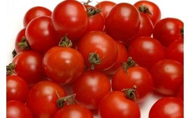 001 【特別栽培農産物】ミニトマト 1.4kg