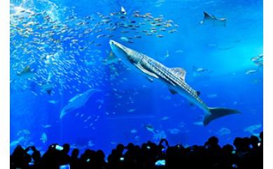 【迫力の大水槽】沖縄美ら海水族館 チケット引換券(大人券4枚)