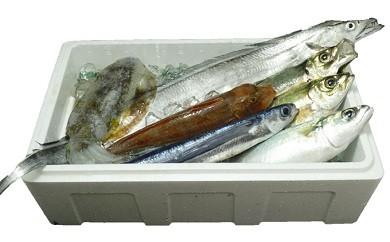 土佐の黒潮鮮魚セット 高級魚入り!