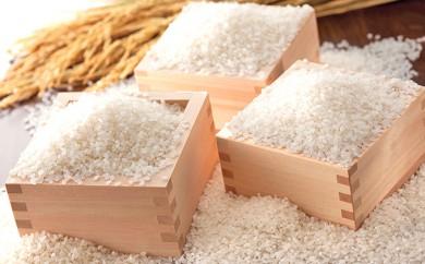 [№5687-0089]埼玉県産 特別栽培米 彩のかがやき 10kg