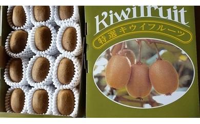 2101 キウイフルーツ(10~12個入り)