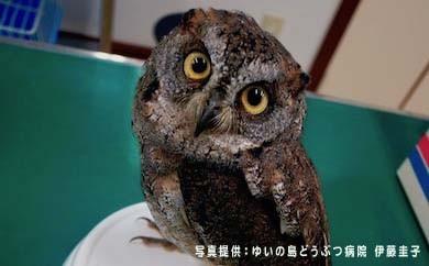 奄美野生生物保護基金に寄付