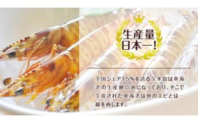 急速冷凍活〆車海老500gx2 【1kg】