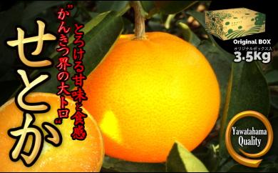 C28-18.愛媛の高級柑橘の代名詞!「せとか」約3.5kg入