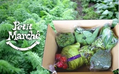926 プチマルシェお野菜BOX(S)