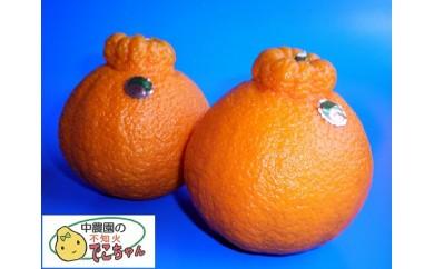 中農園の不知火でこちゃん(約3.5kg:9~14個入り)