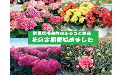 [№5756-0055]【年間5回お届け】明和町の季節の花いろどりセット