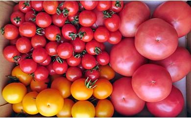 木更津水耕組合 トマト詰め合わせ 3kg
