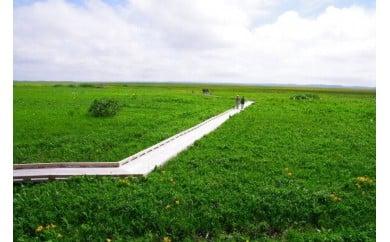 U-03 サロベツ湿原体験!木道自然ガイド(5~10月)