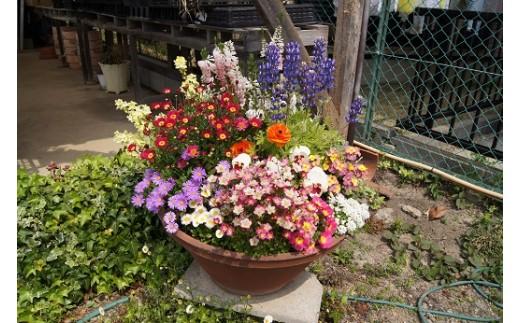 D-085 季節の花の寄せ植え 30㎝