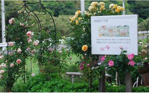 温暖な館山の里山で300種、2,000株のバラを栽培する「バラの学校」。