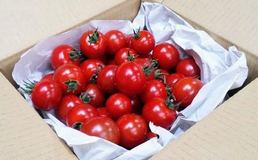 フルーツトマト「太陽のめぐみ」(1kg)