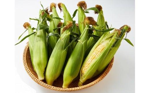 スイートコーン「甘々娘」(4kg)2021年6月発送分受付開始!