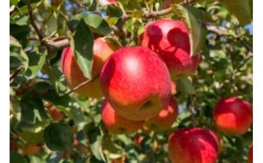 FY18-396 【ご自宅用】山形産ふじりんご 10kg