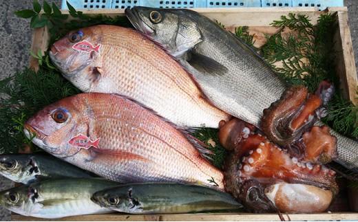 [№5546-0138]明石浦直送 旬の鮮魚BOX年4回コース