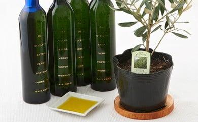 [№5735-0342]EXV.オリーブオイル トルトサ&オリーブの苗木セット