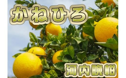 爽やかな香りと上品な甘酸っぱさ!河内晩柑3.5kg