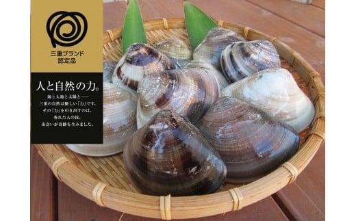 c_21 丸元水産 桑名産蛤(ハマグリ)3.0kg