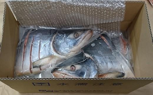 ブランド銀毛鮭「銀聖(ぎんせい)」を甘塩仕立てにした新巻鮭切身を6パック(※あら付)にしてお届けします。