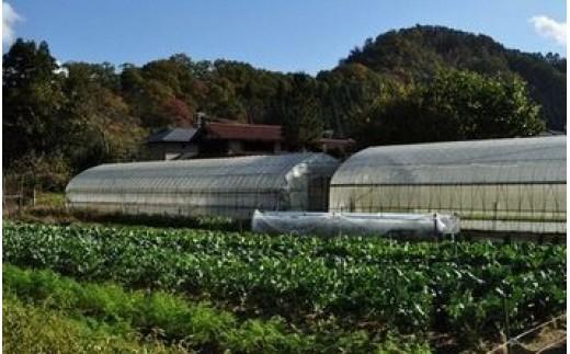 ハウスと路地を合わせて年間70種類以上の野菜を栽培
