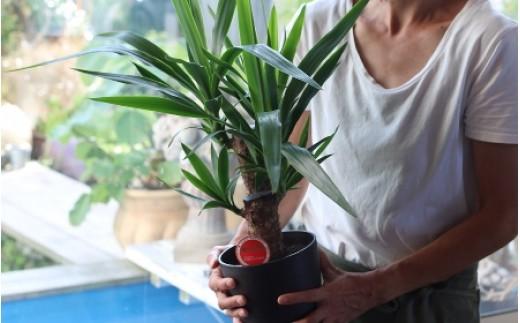 SL0054 植物のある暮らし 観葉植物「テーブルプランツ」