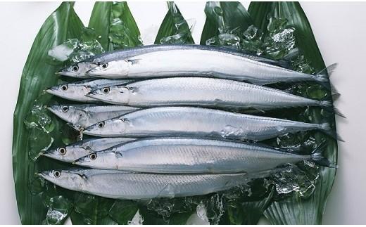 秋は生秋刀魚をお届けします。