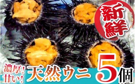 延岡産 天然ウニ 5個 ムラサキウニ 日豊海岸どれ  B206