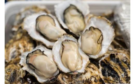 B025-01壱岐 内海湾産 殻つき生牡蠣3kg(オープナー付き)  3,900pt