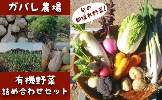 ガバレ農場の季節の有機野菜詰め合わせセット1