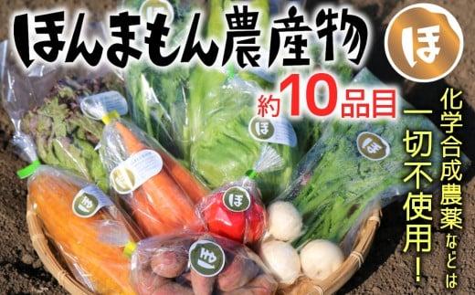 化学合成農薬等不使用で栽培!安心安全な「ほんまもん野菜」を10品目前後お届け♪