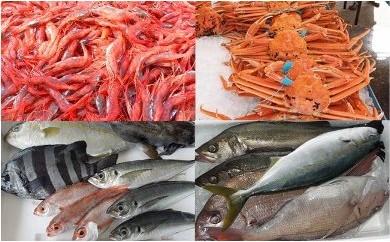 能登・西海四季の魚介類定期便 魚介好きコース(年4回)